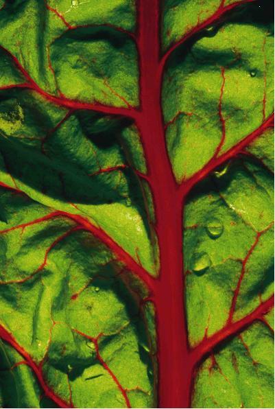 Leafy_veggie_2